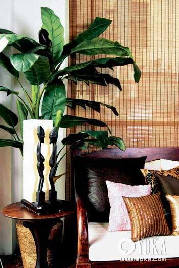 室内植物设计方案